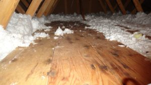 Do You Have Dangerous Mold In Your Attic On Top Home